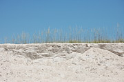 Panama City Beach Prints - Love of Sea Oats Print by May Photography