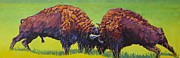 Bison Art - Love Rights Ii by Patricia A Griffin