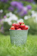 Strawberry Art Metal Prints - Love Strawberries Metal Print by Tim Gainey