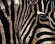 Zebra Drawings - Love by Teri Schuster