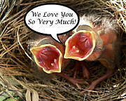 Baby Cardinals Posters - Love You Greeting Card Poster by Al Powell Photography USA