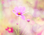 Pink Flower Prints Metal Prints - Lovechild Metal Print by Amy Tyler