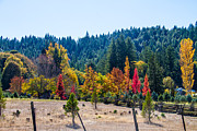 Brian Williamson - Lovely Fall Napa C.A....