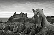 Berwick Posters - Lovely horse and Tantallon Castle Poster by RicardMN Photography