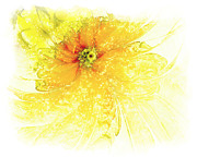 Petals Digital Art Framed Prints - Lovely Lemon Framed Print by Amanda Moore