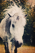 Horse Pictures Prints - Lovely Lulu Print by Angela Doelling AD DESIGN Photo and PhotoArt