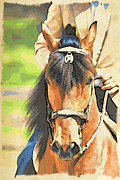 Paso Fino Horse Photos - Lovely Paso by Alice Gipson