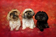 Puppies Digital Art - Lovely Trio  by Nicole Markmann Nelson