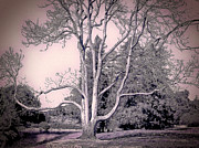 Black White And Sepia Art - Lovers Tree by Devalyn Marshall