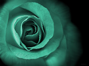 Rain Drop Posters - Loves Eternal Teal Green Rose Poster by Jennie Marie Schell