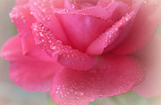 Love's Favourite Rose Print by  The Art Of Marilyn Ridoutt-Greene