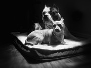 Dogs Photos - Loving Friends 1 by Larry Marshall