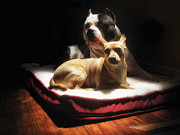 Dogs Photos - Loving Friends 2 by Larry Marshall