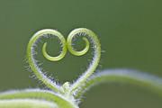 Loving Nature Print by Maria Ismanah Schulze-Vorberg