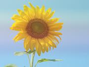 Loving The Sun Print by Ann Horn