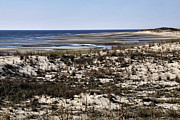 Atlantic Beaches Posters - Low Tide At Cape Henlopen Usa Poster by Gerlinde Keating - Keating Associates Inc
