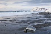 Kodiak Photo Prints - Low Tide in the Winter Print by Tim Grams
