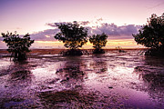 Myeress Framed Prints - Low Tide Mangrove Framed Print by Joe Myeress