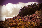Seascape With Clouds Posters - Low Tide Shoreline Closeup With Clouds Poster by Barbara Griffin