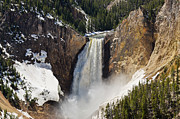 Lower Falls Of The Yellowstone Print by Sue Smith