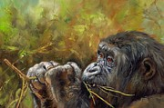 Apes Framed Prints - Lowland Gorilla 2 Framed Print by David Stribbling