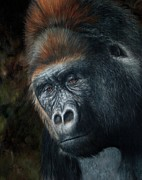 Gorilla Framed Prints - Lowland Gorilla Painting Framed Print by David Stribbling