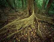 Forest Floor Photos - Lowland Tropical Rainforest by Ferrero-Labat