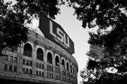 Black White Photography Prints - LSU Through the Oaks Print by Scott Pellegrin