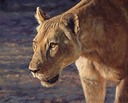 Lion Oil Paintings - Luangwa Princess  by David Stribbling