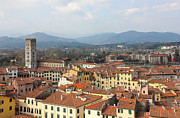 Rooftop Posters - Lucca Aerial panoramic view with Piazza dell Anfiteatro Poster by Kiril Stanchev