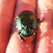 Green Monster Prints - Lucky Beetle Print by Anthony Scarpace