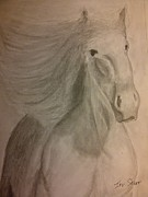Wild Horse Drawings - Lucky by Irving Starr