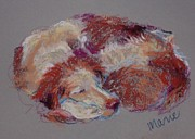 Sleeping Dog Pastels Prints - Lucy Sleeping Two Print by Marie Marfia
