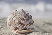 Seashell Art Photo Prints - Luminosity Print by Sharon Mau