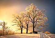 Winter Trees Metal Prints - Luminous - Blue Ridge Winter Sunset Metal Print by Dave Allen