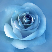 Blue Florals Prints - Luminous Blue Rose Flower Print by Jennie Marie Schell