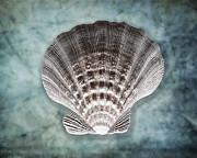 Geometric Shapes Posters - Luminous Fan-Shaped Shell  Poster by George Oze