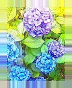 Holly Martinson - Luminous Hydrangeas