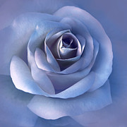 Luminous Lavender Rose Flower Print by Jennie Marie Schell