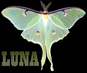 Nature Study Photo Posters - Luna 1 Poster by Mim White