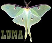 Luna 1 Print by Mim White