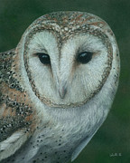 Owl Pastels - Luna by Laurie Klein
