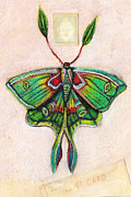 Luna Mixed Media Prints - Luna Moth Print by Amy Norden