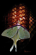 Photo Manipulation Photo Posters - Luna Moth Poster by EricaMaxine  Price
