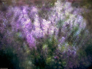 Lupine By The River  Print by Kevin Felts