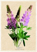 Parchment Mixed Media Framed Prints - Lupine Framed Print by Jim Emmons