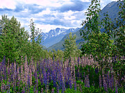 British Columbia Mixed Media Prints - Lupines and Mountains Print by Janet Ashworth