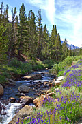 Little Lakes Valley Framed Prints - Lupines at Rock Creek - Fine Art by Lynn Bauer Framed Print by Lynn Bauer