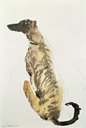 Listener Framed Prints - Lurcher Sitting Framed Print by Lucy Willis