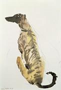 Lurcher Sitting Print by Lucy Willis